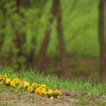 Wiosna w Sobiborze