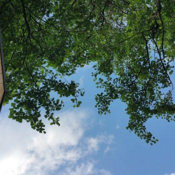 Domki w gałęziach drzew są gotowe, zapraszamy :)