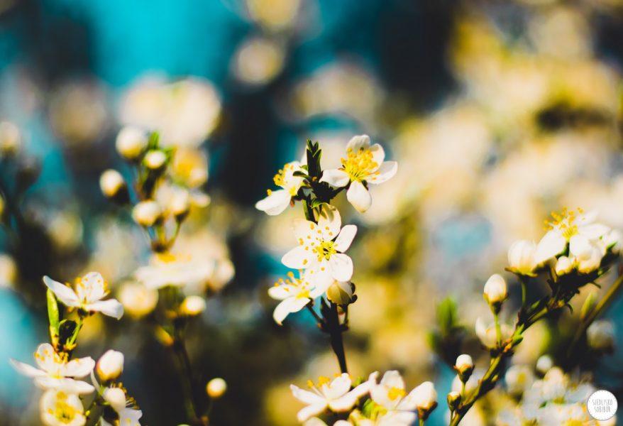 Wiosna w Siedlisku