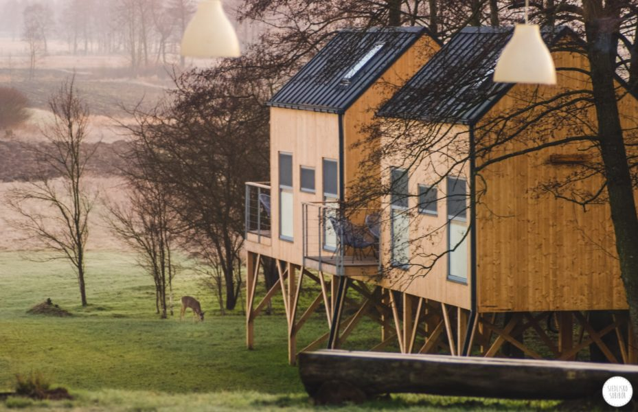 Domki w gałęziach drzew