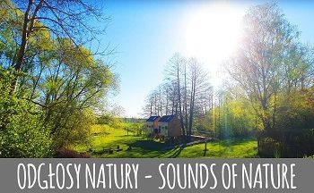 Majowy śpiew ptaków o poranku - dźwięki natury, relaks