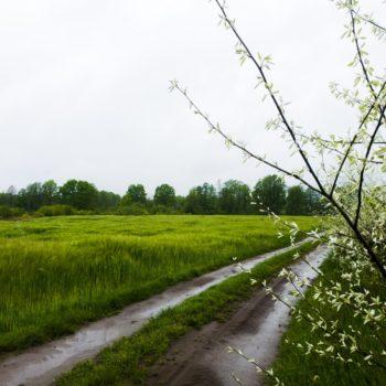 Poranny deszcz